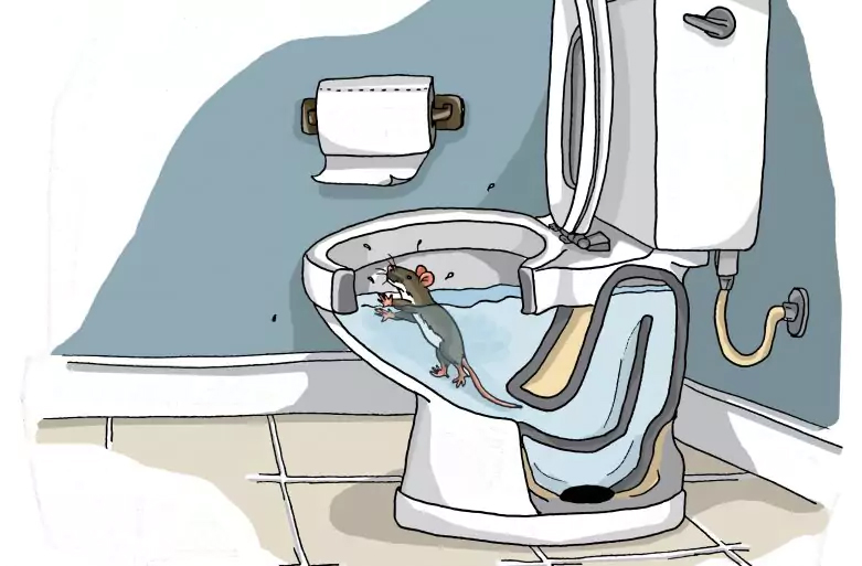 To see how a rat could swim up your toilet, check out this video by National Geographic.